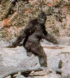big foot, sasquatch