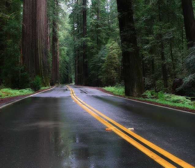 rainy california road